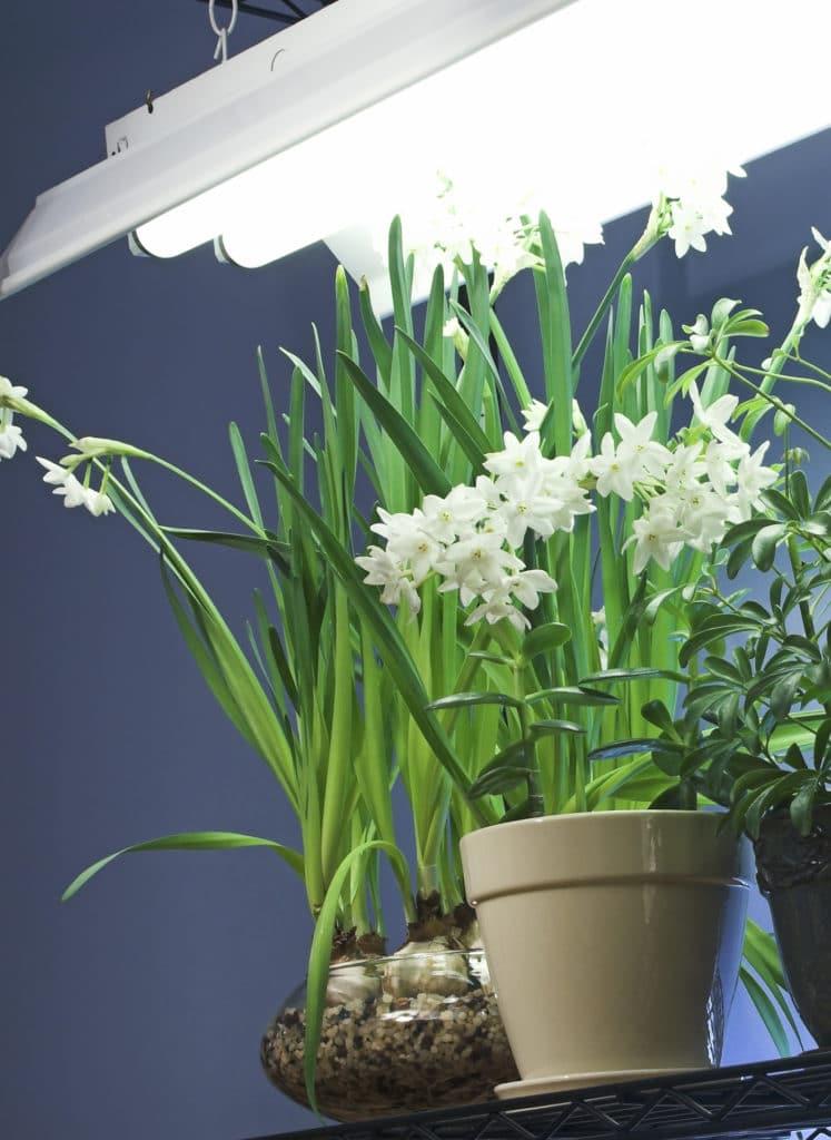Beleuchtung für die Blumen