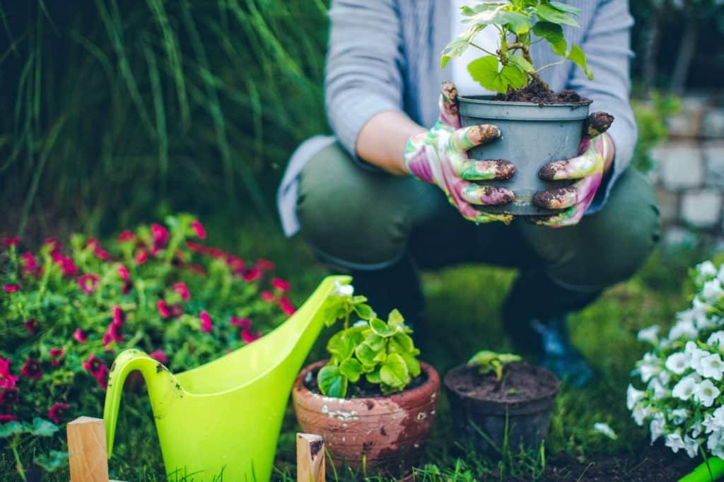 Pflanzen in Töpfer pflanzen