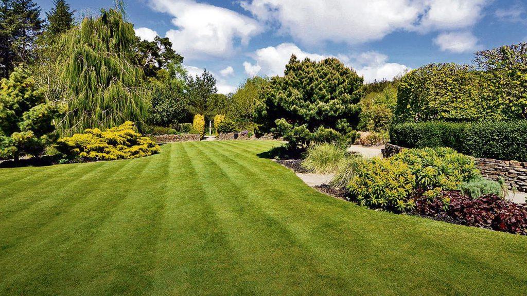 Ein englischer Rasen