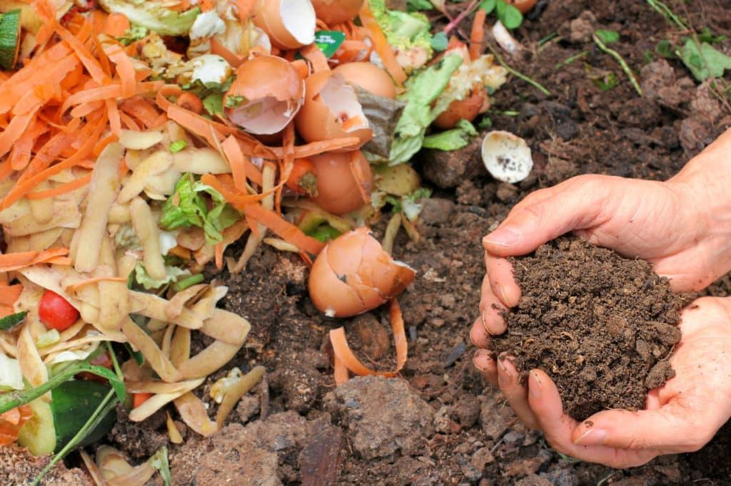 Essensreste Kompostieren