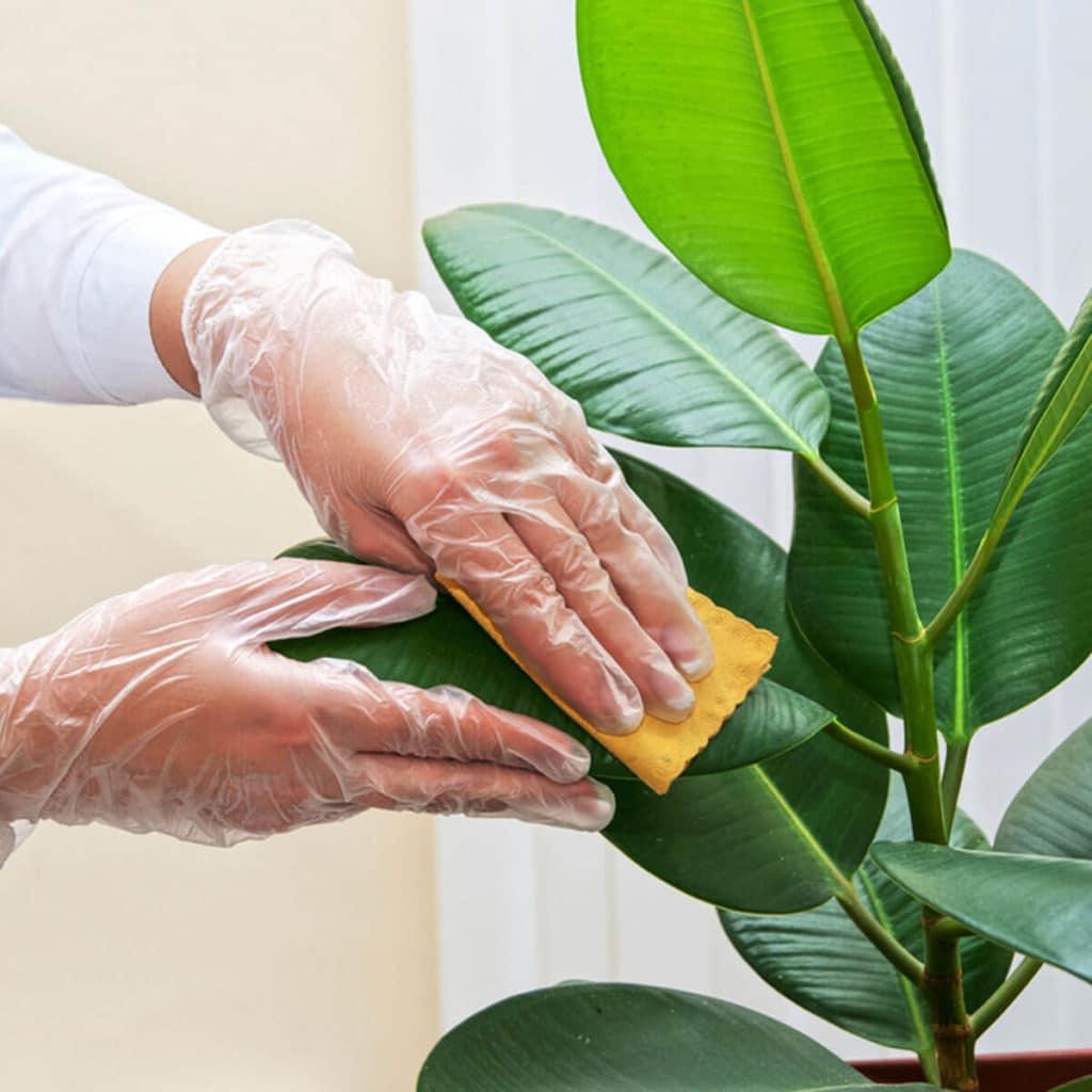 Utieranie prachu na kvete