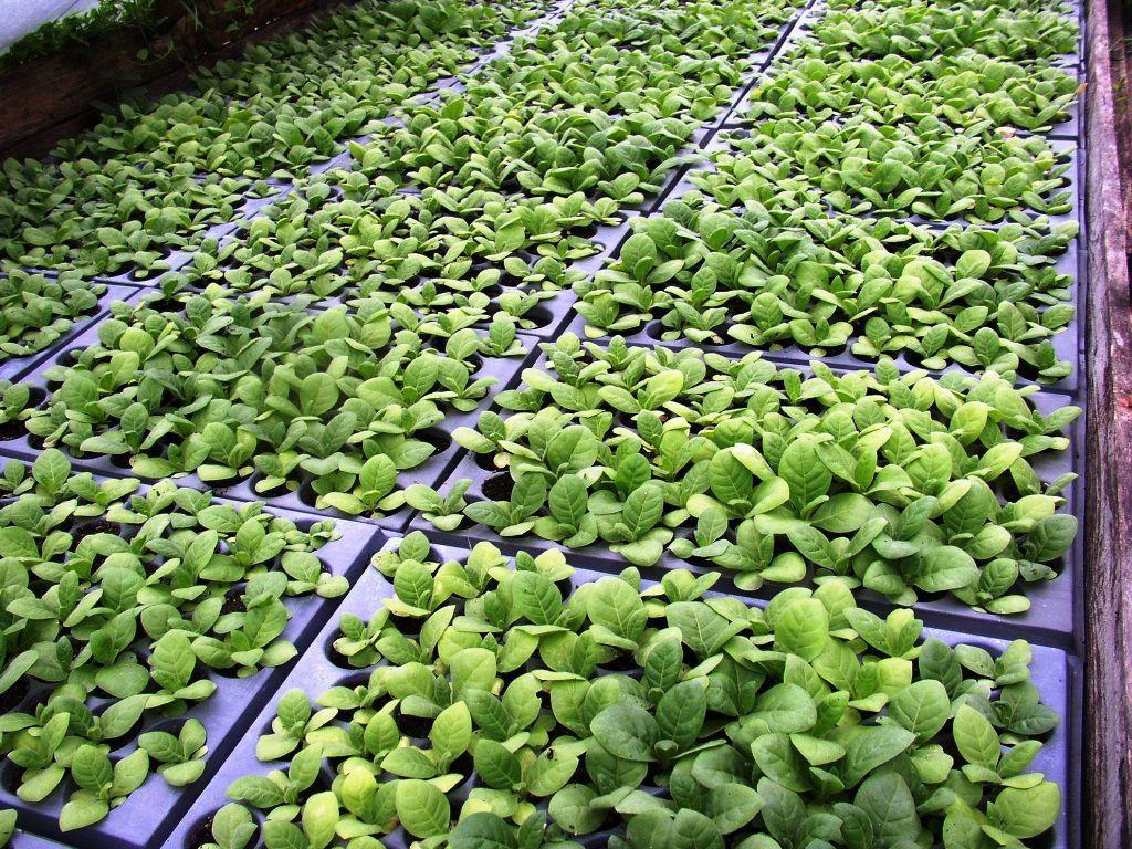 Pestovanie byliniek