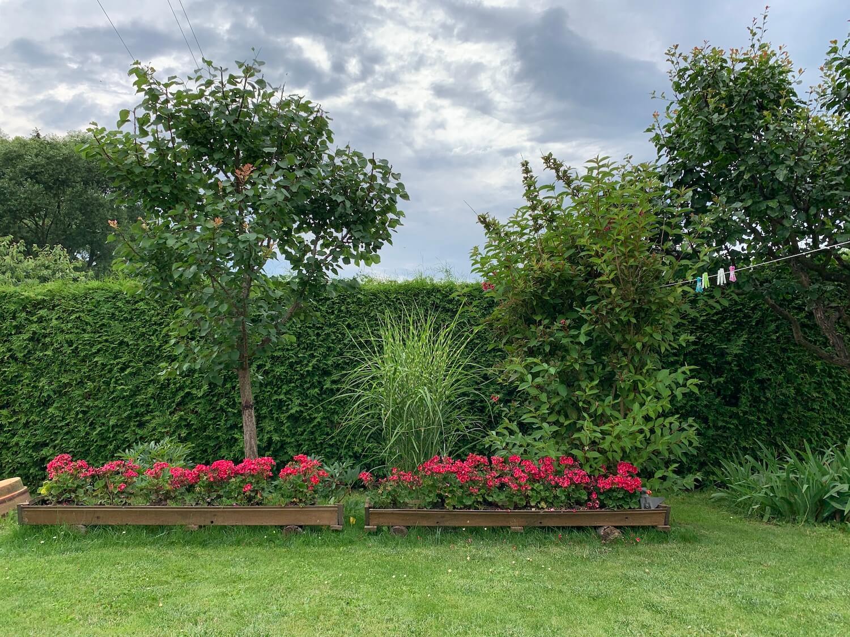 Gartenhecke und rote Blumen