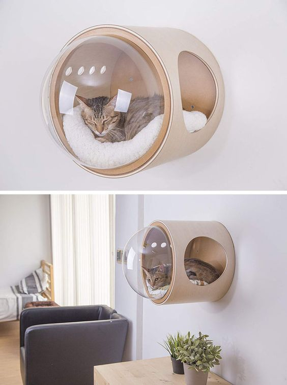 Ein Platz für Relax Ihrer Katzen an der Wand