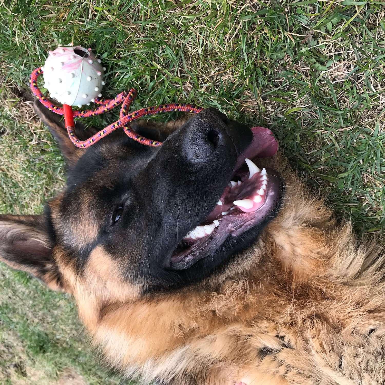 Ein Hund mit seinem Lieblingsball