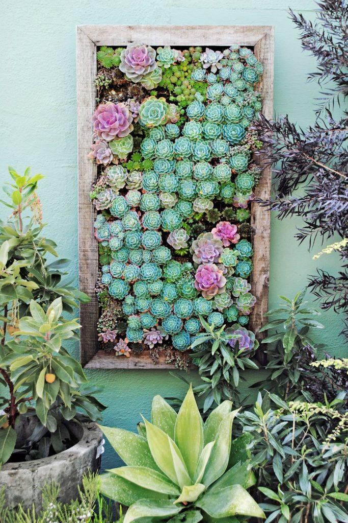 Kaktusse im Bildrahmen