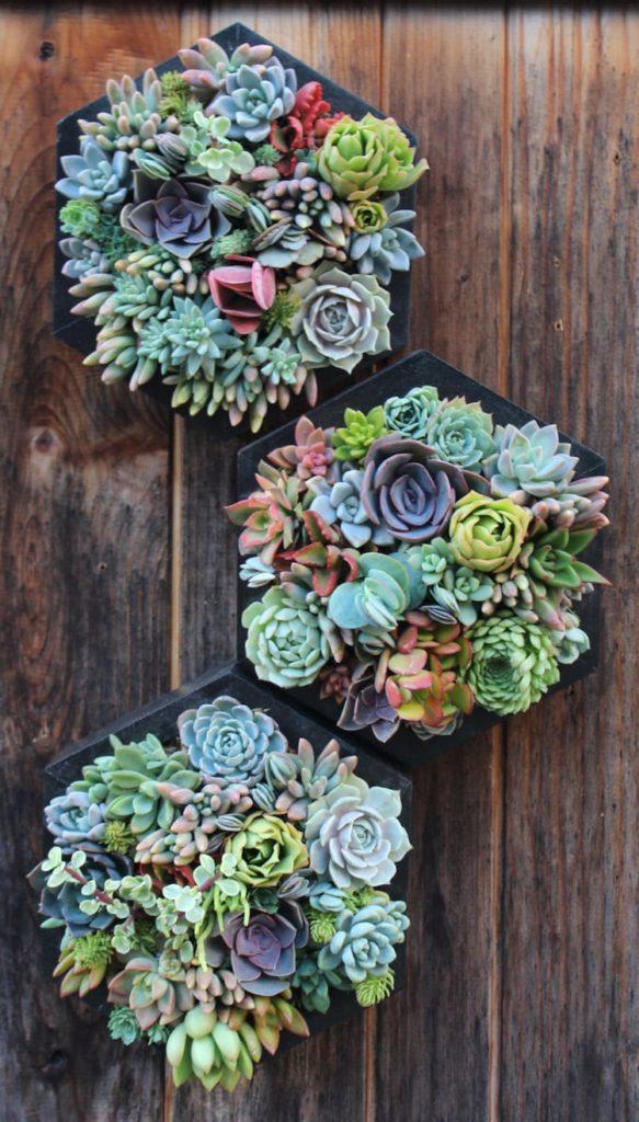 Kaktusse in Blumentopfen