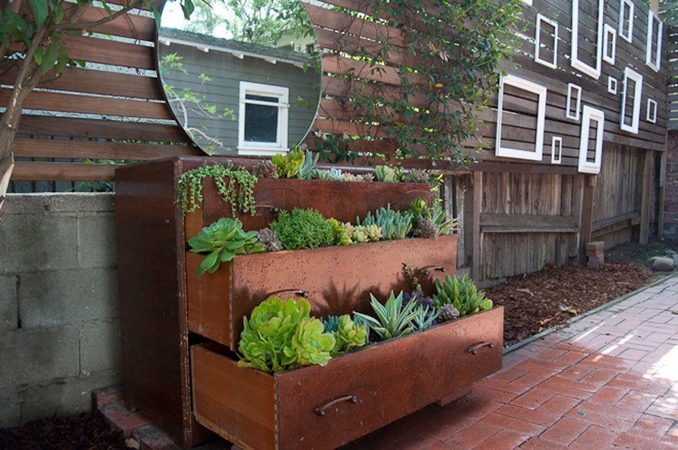 Pflanzen im alten Schrank