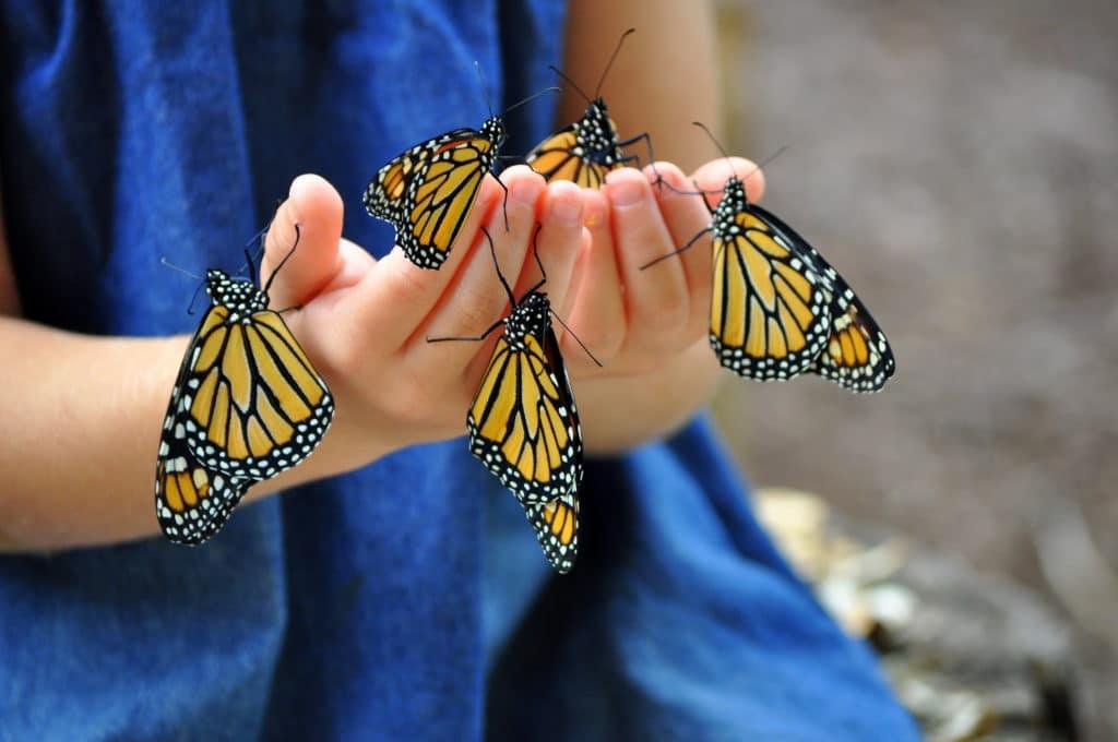 Schmetterlinge in den Händen