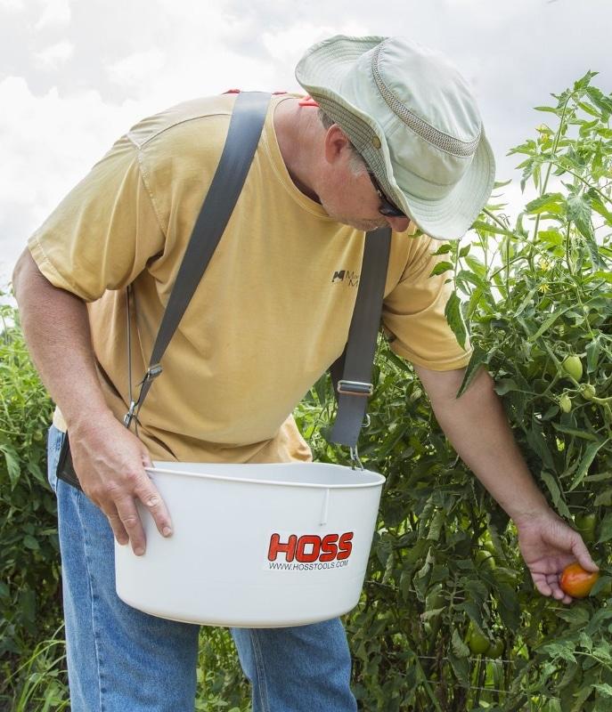 Ein Mann sammelt Tomaten