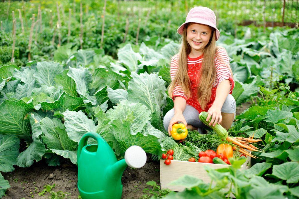 Ein Mädchen sammelt Gemüse