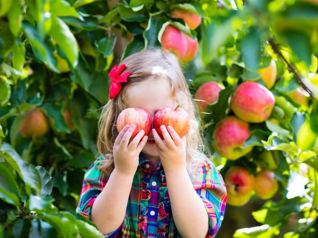 Ein Mädchen im Garten hat 2 Äpfel