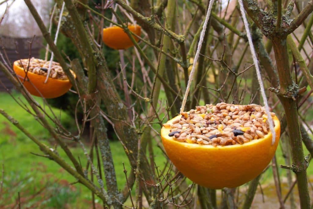 Kerne für Vögel in einer Orangenschale