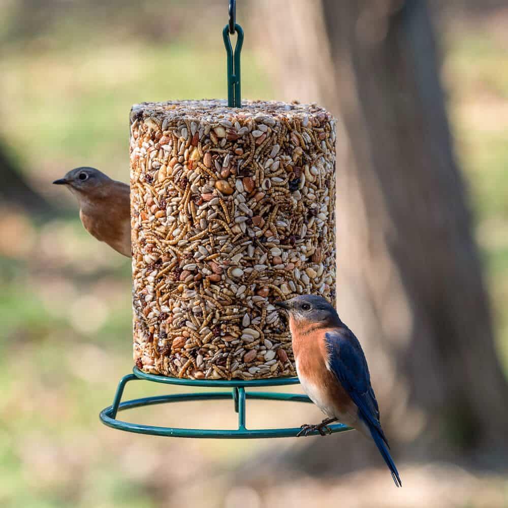Ein Futterspender für Vögel