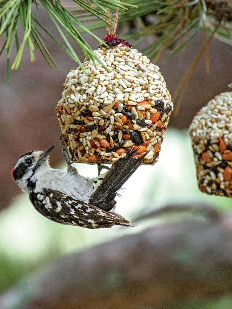 Essbare Dekoration für Vögel
