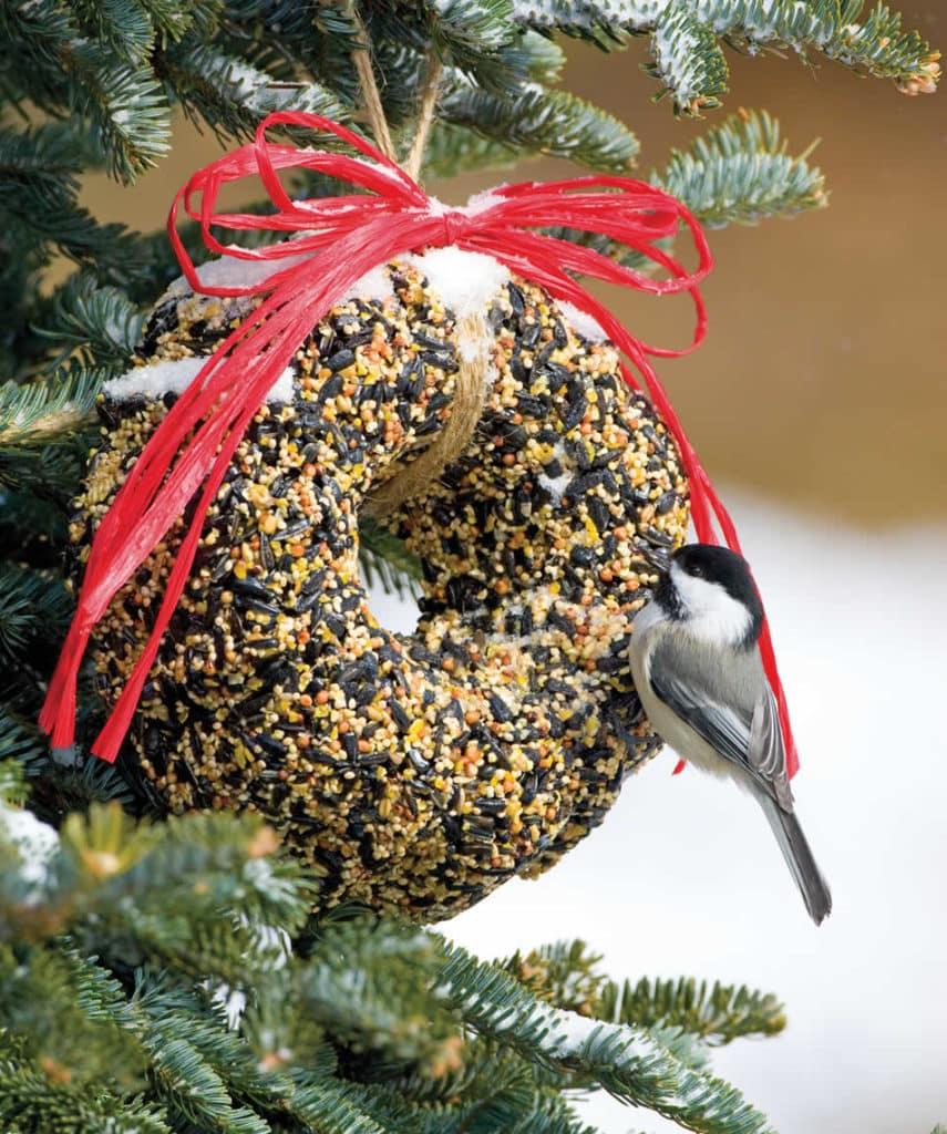 Essbare Dekorationen für Vögel