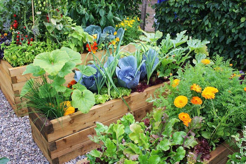 Erhöhtes Beet für Gemüse