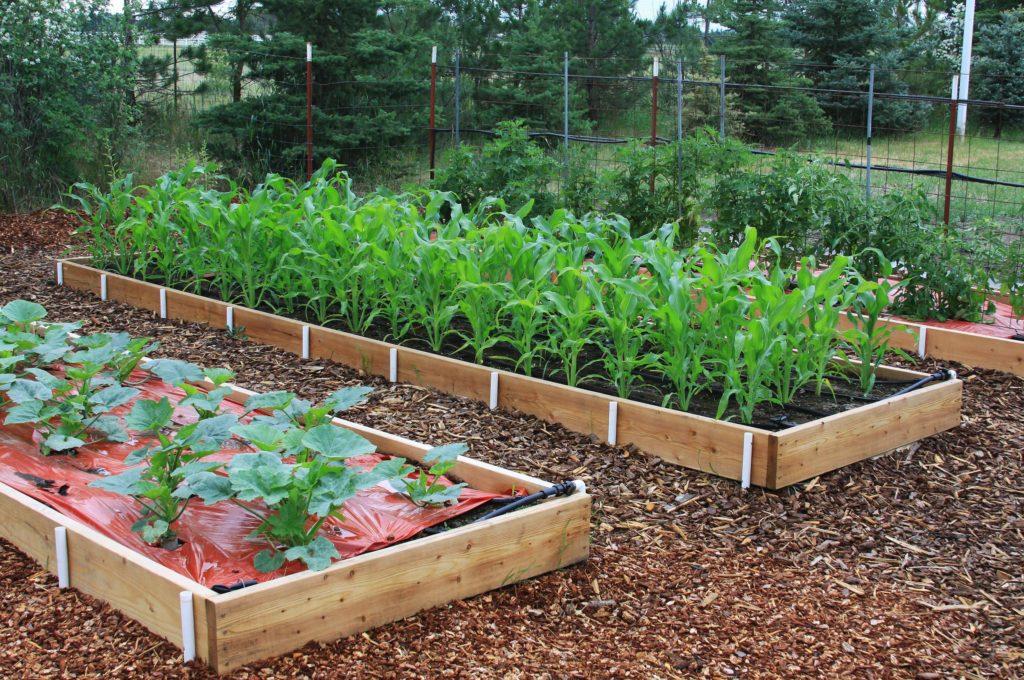 Erhöhtes Beet für Gemüseanbau