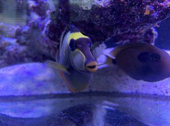 Das Meeraquarium in dem Showroom von GARDEON
