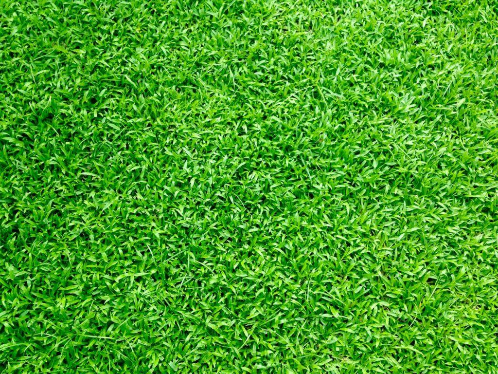 Grünes Grass