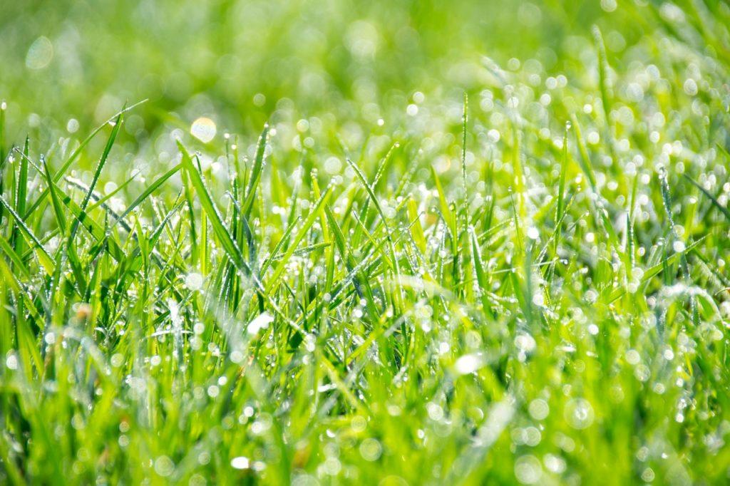 Tau am Grass