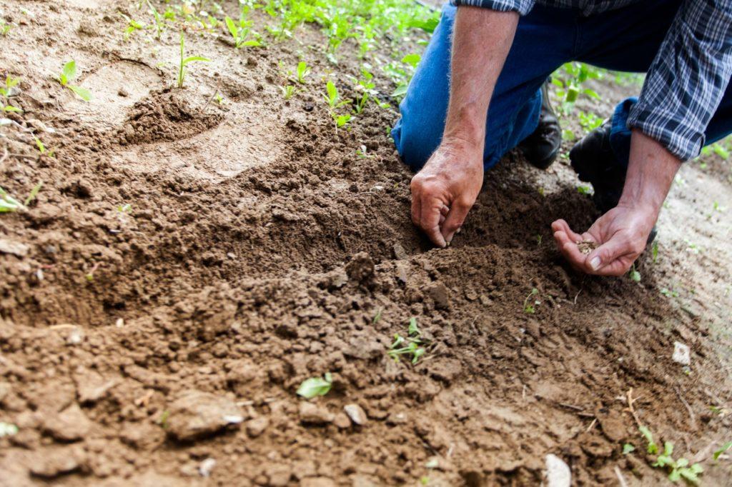 Ein Mann pflanzt Pflanzen