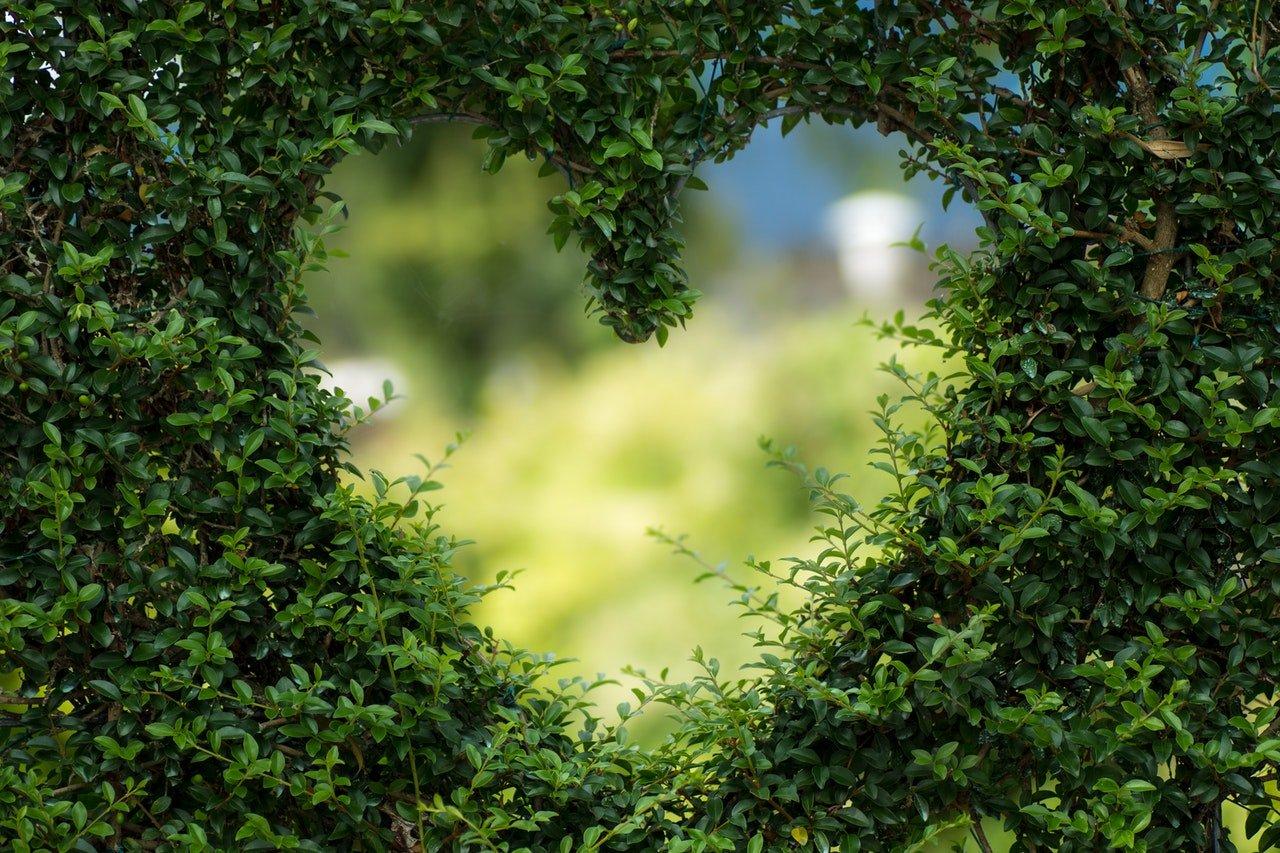 Srdce v kríku