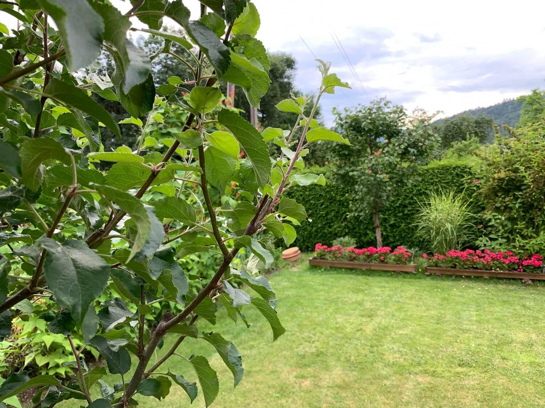 Ein grüner Garten mit Blumen im Hintergrund