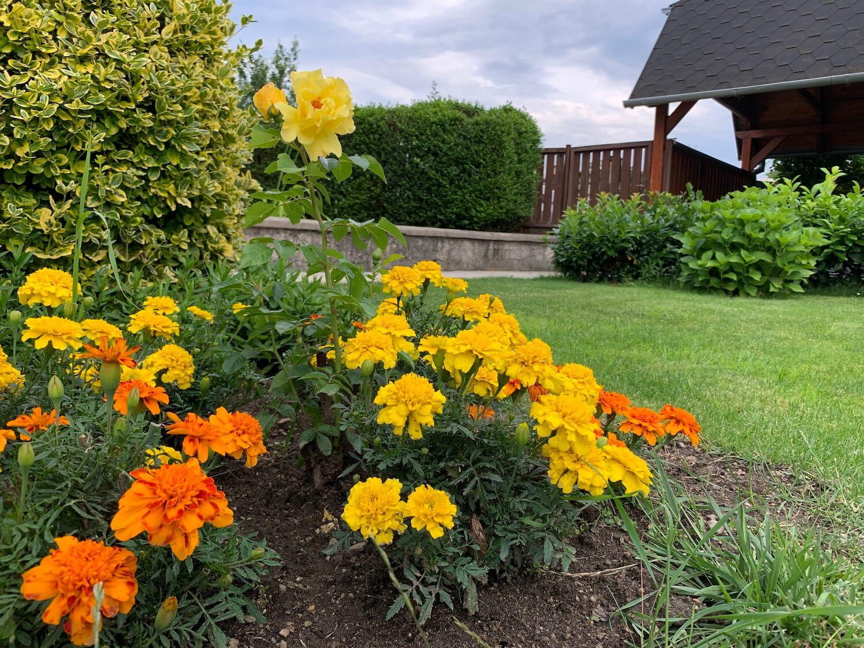 Detail an die Blumen in dem Garten