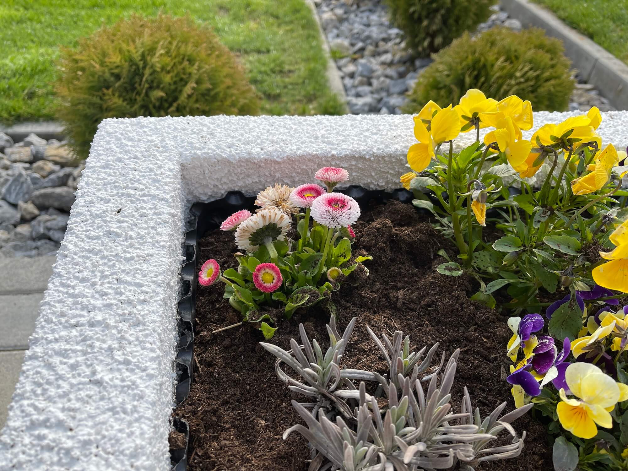 Die erste Blumen im erhöhten Beet