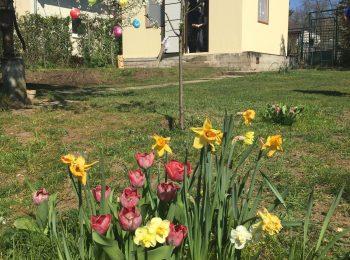 Das neue Gartenhaus bei einem der GARDEON Kunden