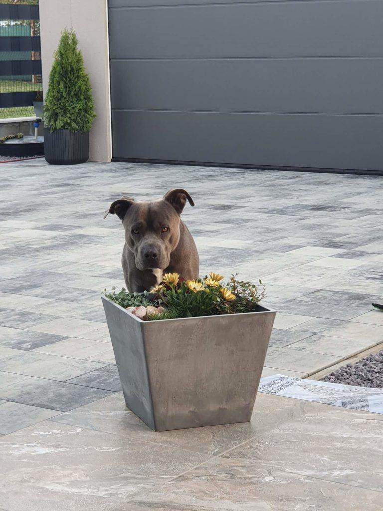 Ein Hund vor einer neuen GARDEON Garage
