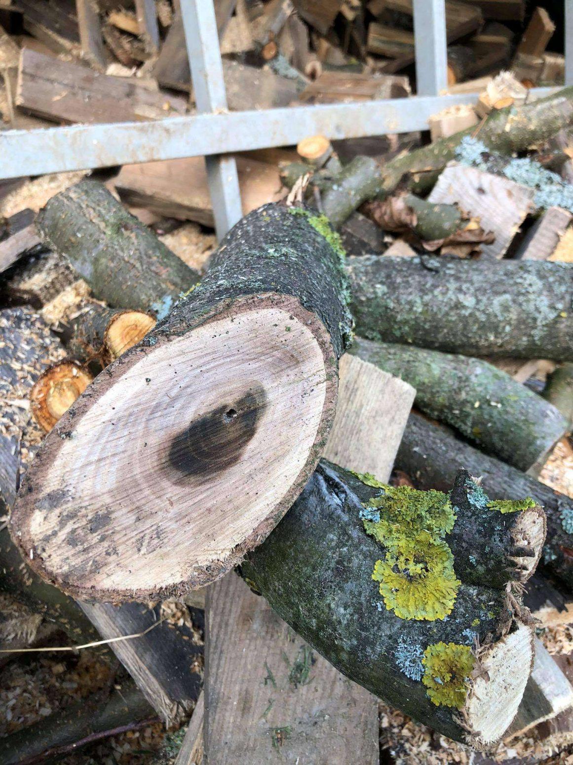 Holz und Äste