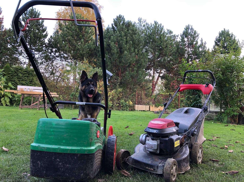 Ein Hund mit 2 Mähmaschinen im Garten