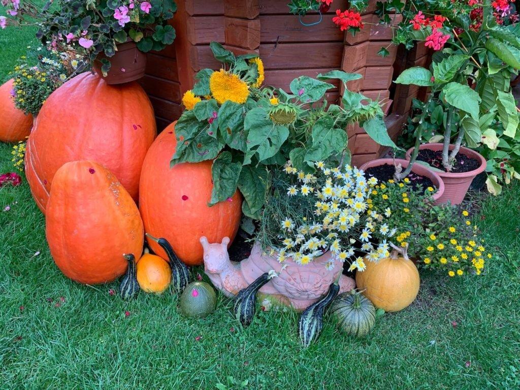 Kürbis-Deko im Garten