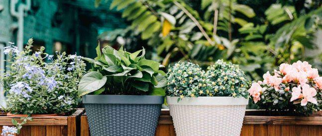 Blumentöpfe aus Kunststoff am Zaun