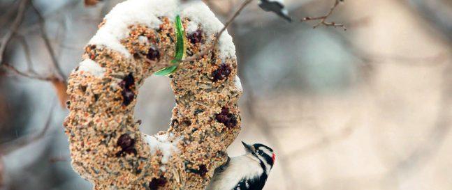 Essbare Deko für Vögel