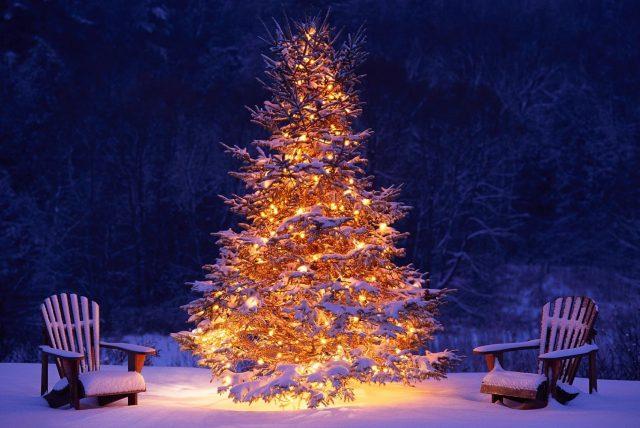 Ein beleuchteter Baum im Winter