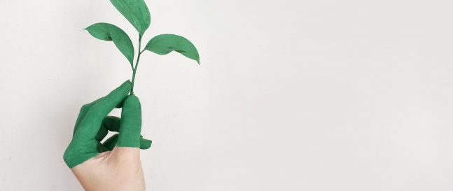 Eine grüne Pflanze in der Hand